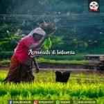 agrowisata di indonesia
